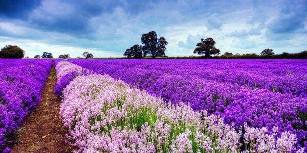 Zájezd do kouzelné Provence: 2 noci se snídaní