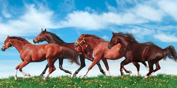 3 báječné dny na koňské farmě na Jižní Moravě