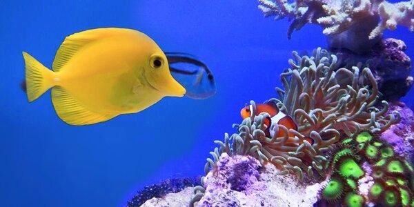 Pozdravte nádherné rybky z Mořského světa