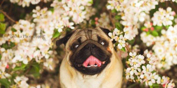 Fotografování psího mazlíčka pro krásnou vzpomínku