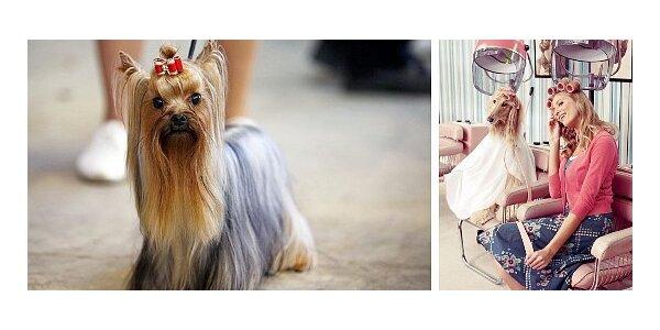 Stříhání a úprava psů - mimořádná akce