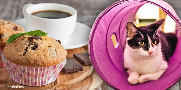 Hodina prima mlsání a mazlení v kočičí kavárně