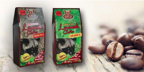 50 gramů cibetkové kávy Kopi Luwak