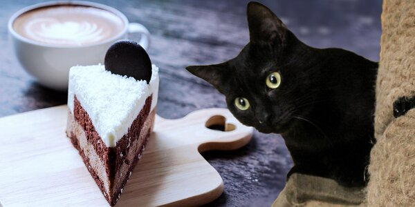 Dezert s kávou či limonádou v kočičí kavárně