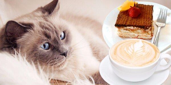 Voňavá káva a domácí dezert v kočičí kavárně