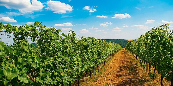 Dovolená s konzumací vína na Jižní Moravě