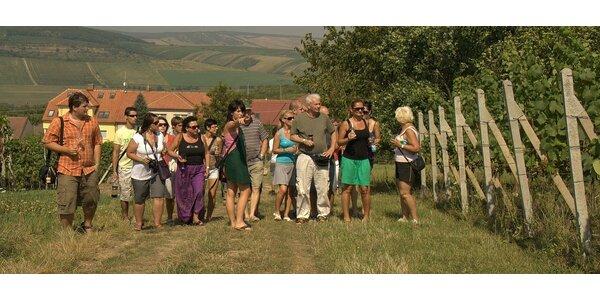 Degustační menu až pro deset osob v rodinném vinařství blízko Brna