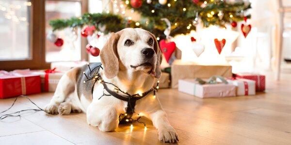 Vánoční balíčky pro vaše psí mazlíčky