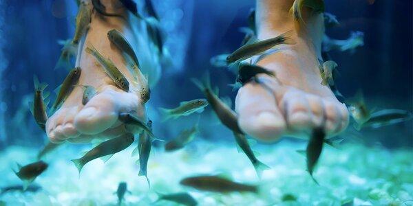 Lázeň s rybkami Garra Rufa pro vaše nohy a ruce