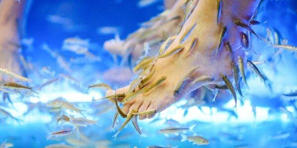 Koupel nohou či rukou s rybkami Garra Rufa