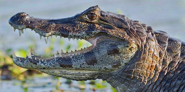 Vstupné do Krokodýlí ZOO aneb Vodní plazi naživo