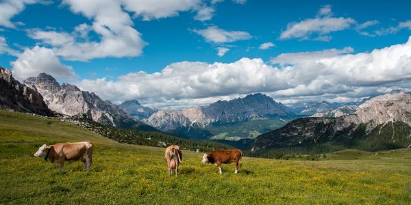 S partou nebo rodinou do rakouských Alp