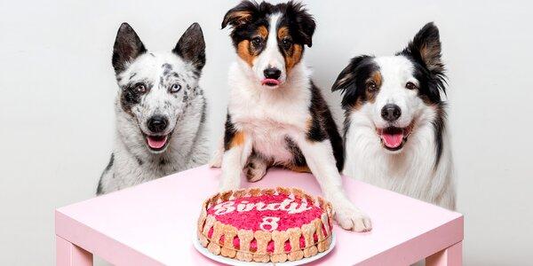 Speciální dort pro pejska plný zdravých surovin