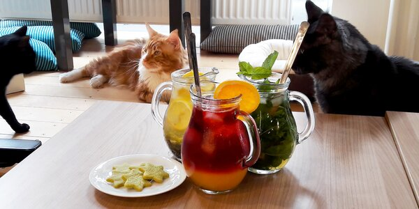 Ledový čaj a matcha sušenky v kočičí kavárně