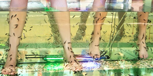 Léčivé koupele nohou s rybkami Garra Rufa