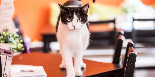 Sladká svačinka: dva dezerty v kočičí kavárně