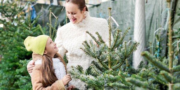 Vánoční stromeček smrk stříbrný v super kvalitě