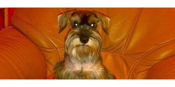 Stříhání a úprava vašeho psa u vás doma
