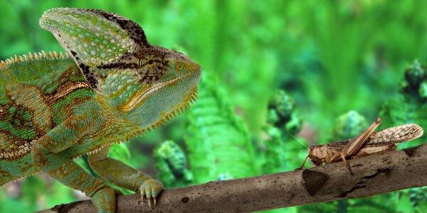 Krmení exotických zvířátek v zooparku Zájezd