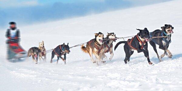 Projížďka se psím spřežením na Vysočině