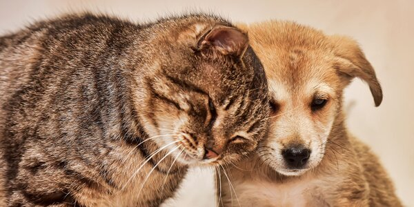 Přispějte veterinářům na pomoc pro zvířata v nouzi