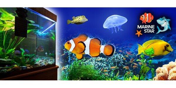 9990 Kč za plně vybavené luxusní mořské akvárium!