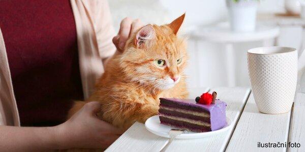 Káva či čaj a dezert k tomu v kočičí kavárně