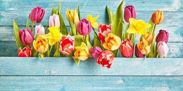 Nádherný pugét z holandských tulipánů či narcisů