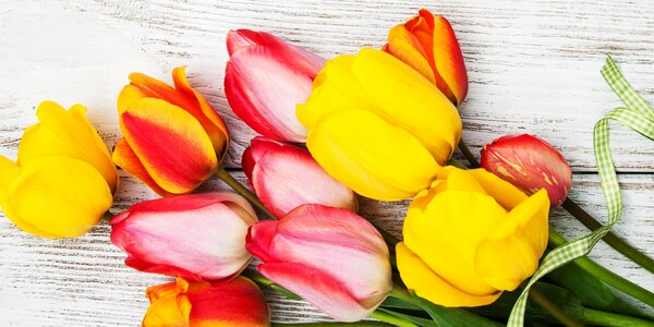 Kytice rudých růží nebo z narcisek a tulipánů
