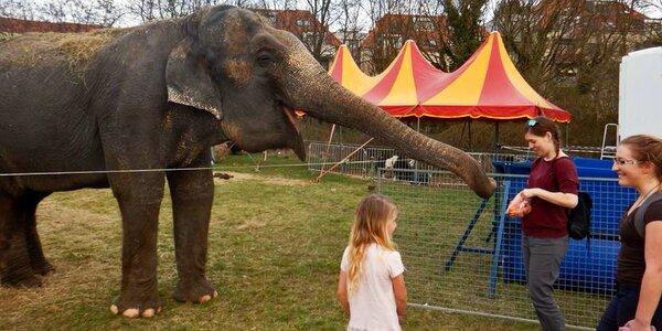 60 min. se slonicí: krmení i projížďka pro 2