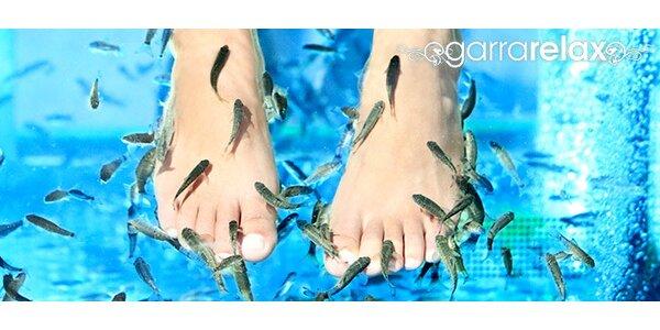 40% sleva na ošetření rybičkami Garra Rufa