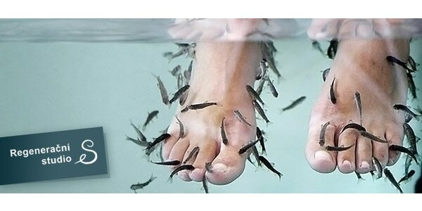 89 Kč za 15minutovou masáž rybičkami Garra Rufa!