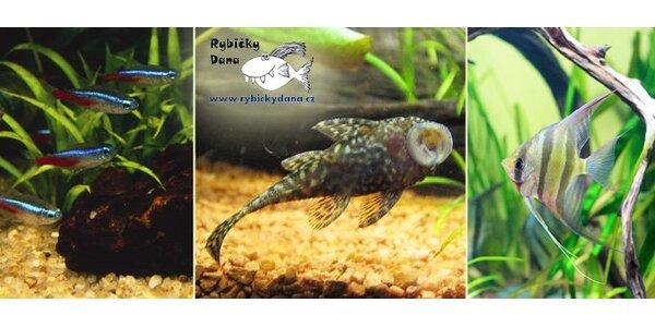 139 Kč za voucher na nákup sladkovodních akvarijních rybiček přímo z chovu.
