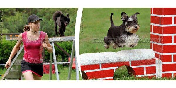 Základní ovladatelnost psa za pár týdnů. Svěřte se profesionálům na výcvik…