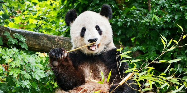 Výlet do vídeňské zoo: orangutani, pandy, koaly