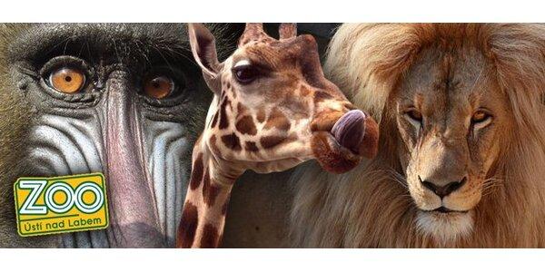 99 Kč za vstupenky do Zoo v Ústí nad Labem pro dvě až čtyři osoby.