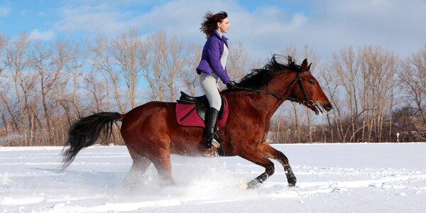 Pro milovníky koní: péče o koně i vyjížďka