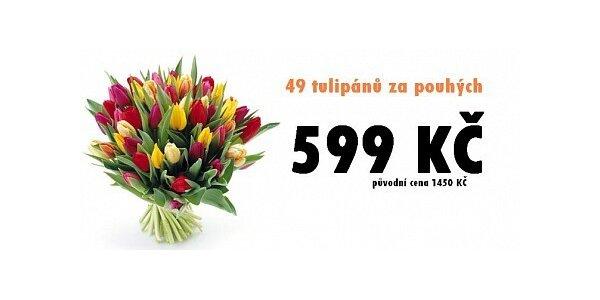 599 Kč za nejlevnější tulipány v ČR. 49 kusů až k Vám domů!