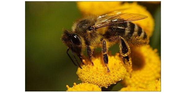 120 Kč za 1kg českého včelího medu přímo od včelaře v hodnotě 165 Kč
