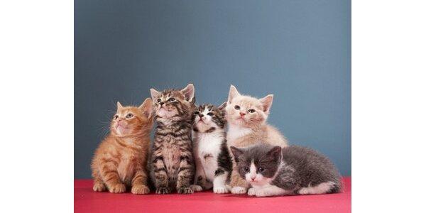 Vstupenky na výstavu koček - rodinné vstupné za 100 Kč v hodnotě 150 Kč