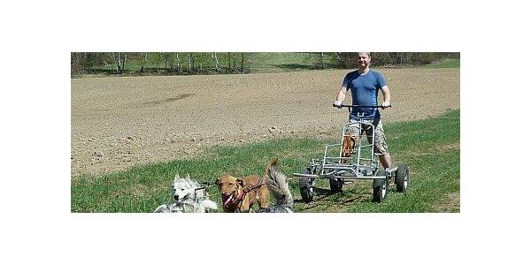 2,5 hodinový kurz jízdy se psím spřežením na čtyřkolce v hodnotě 1200 Kč