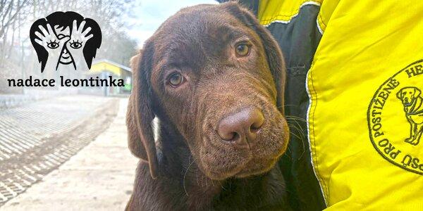Složme se malému Ondrovi na výcvik asistenčního psa