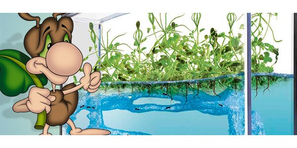 Antquarium, mravenčí akvarium. Objevte svět mravenců!