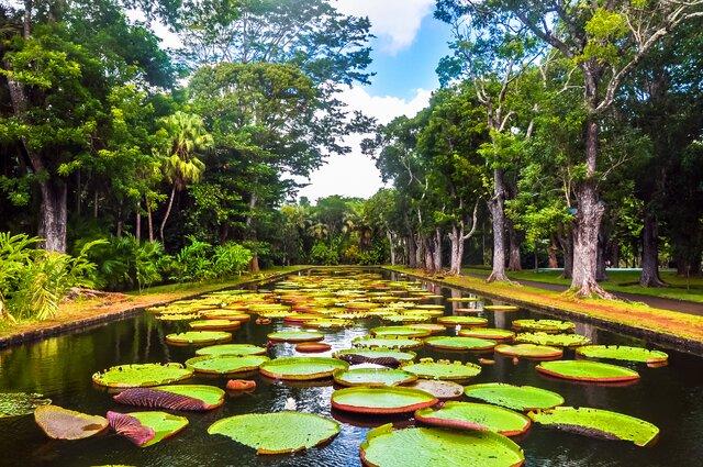 Botanická zahrada Sir Seewoosagur Ramgoolam Botanical Garden