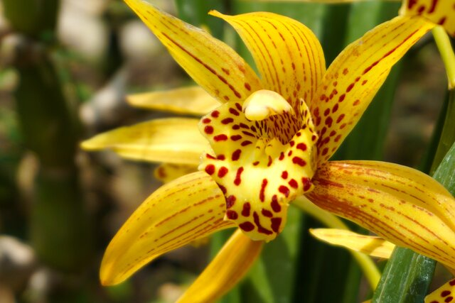 Botanická zahrada v Nitře