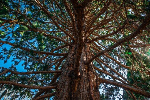 Botanická zahrada v Banské Štiavnici