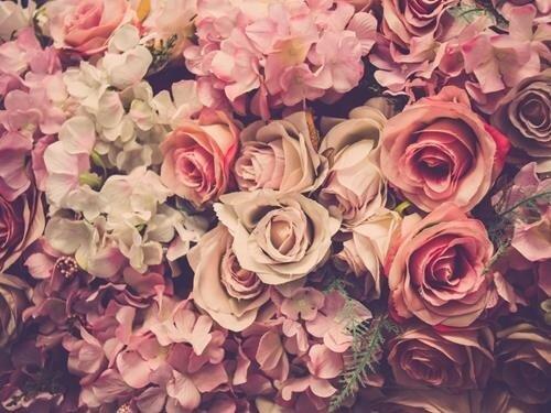Květiny na janovickém zámku