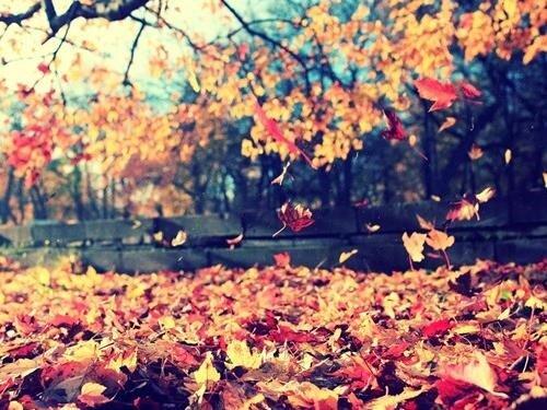 Barevný stromový podzim v Mariánských Lázních