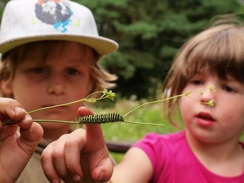 Vydejte se za hmyzem – venkovní online hra