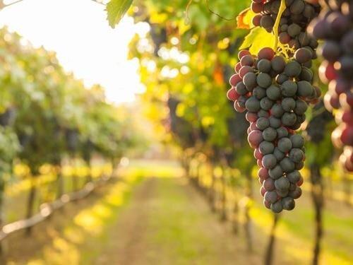 Výstava fotografií jihomoravských vinic